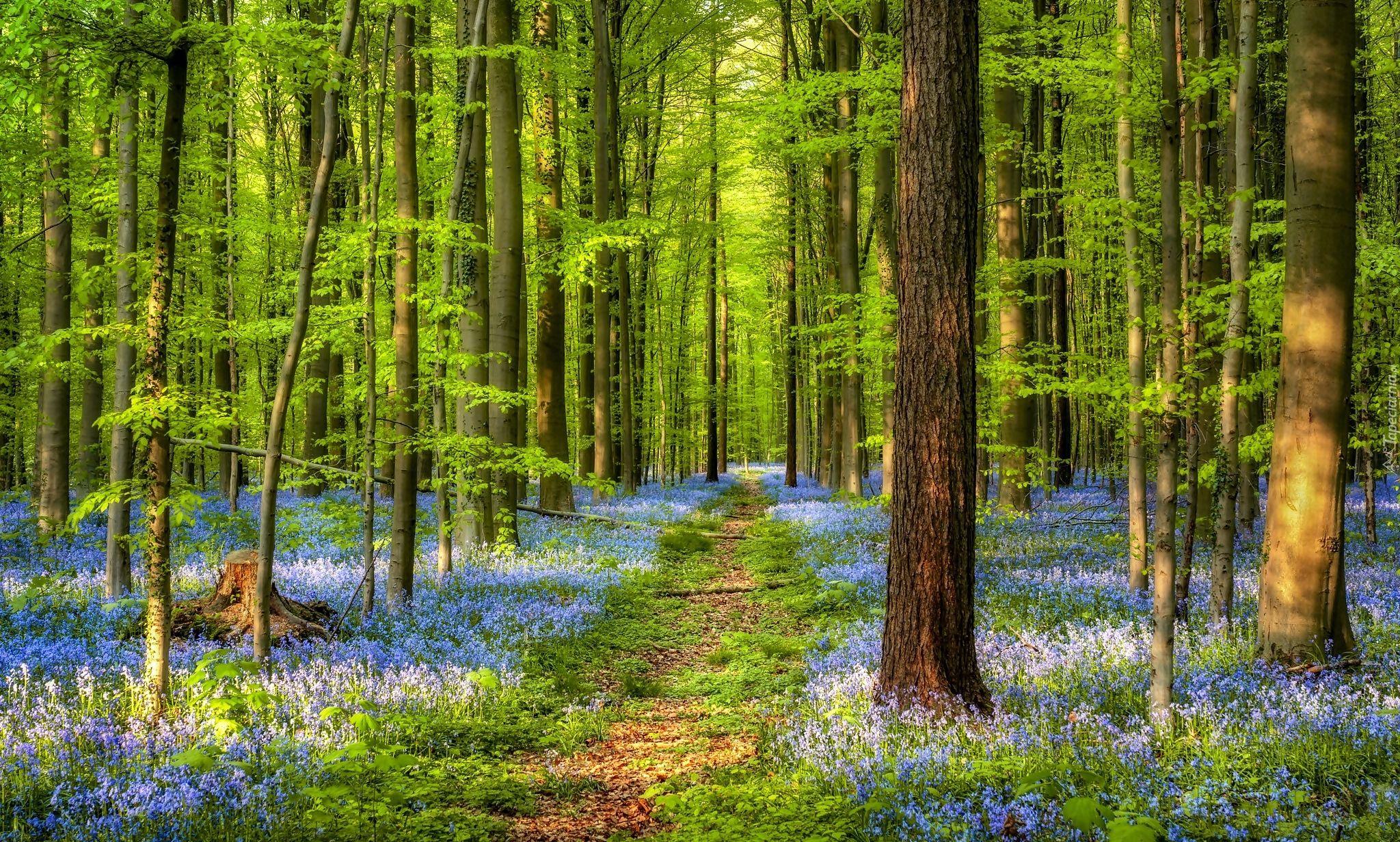 Edycja Tapety Sciezka W Wiosennym Lesie