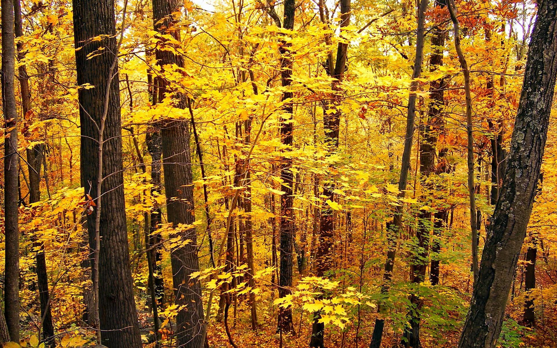 Exploring The Temperate Deciduous Forest Biome