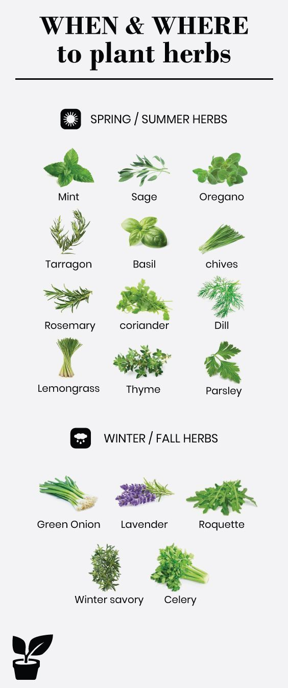 Latest Free beautiful herb garden Suggestions Herbs may be easily developed in your own home if you be sure to get rolling away from the appropriate way. Yo...  #beautiful #Free #garden #herb garden decor Latest Free beautiful herb garden Suggestions