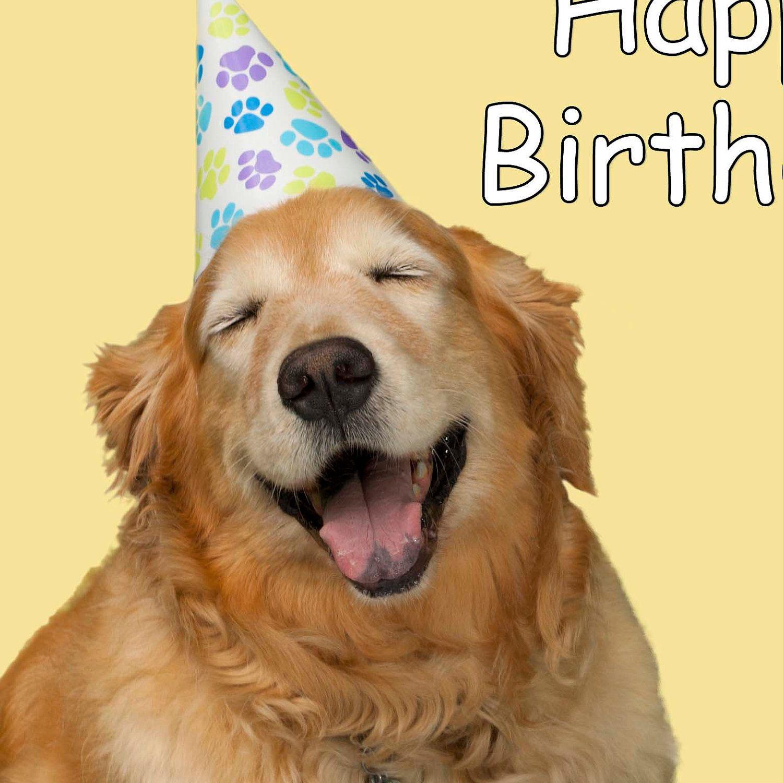 Картинка с животными с днем рождения, картинки жениха
