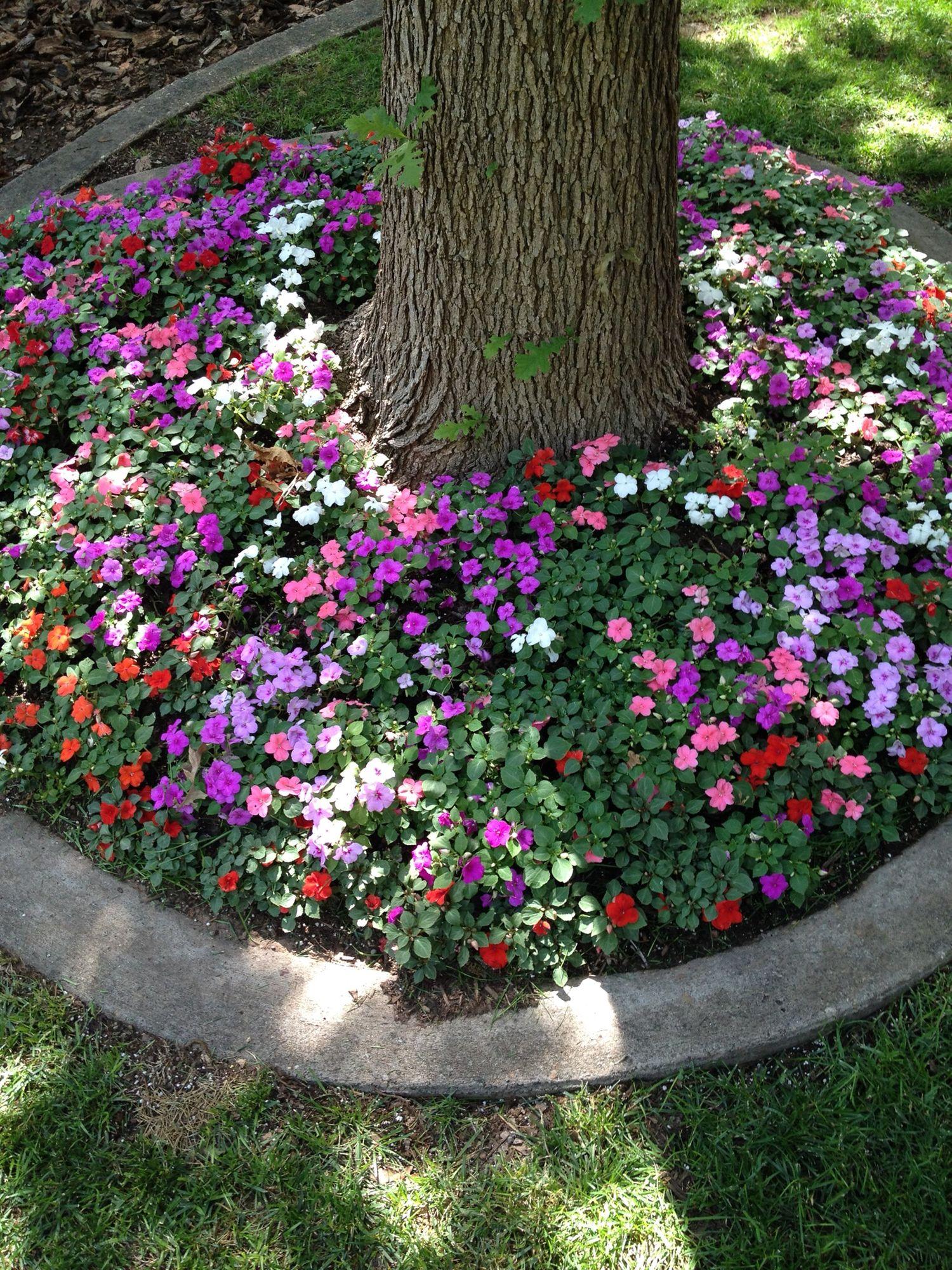 жители европейских цветы вокруг деревьев фото эпоху кринолинов