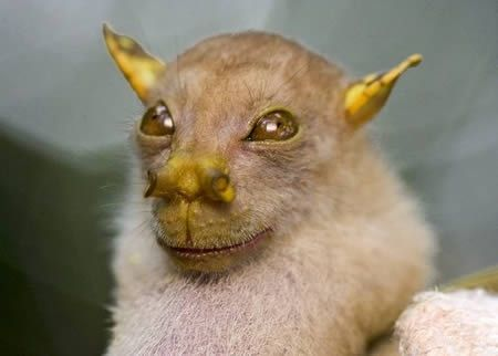 Newly discovered bat species