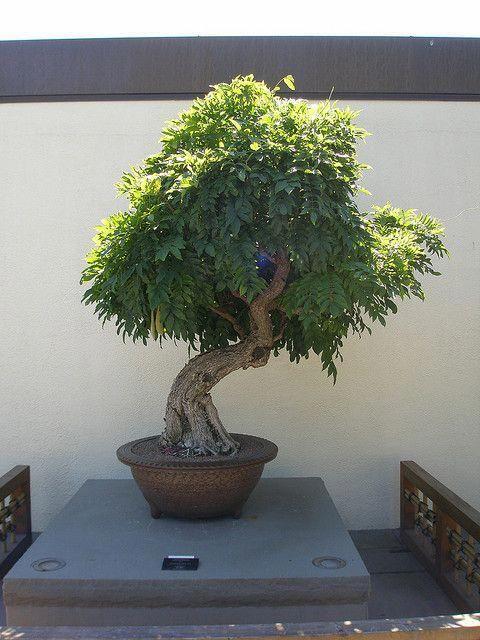 Bonsai Art Pdf
