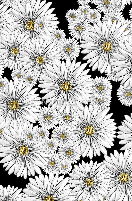 Daisies - Hand Drawn by Notsniw // Art Illustration