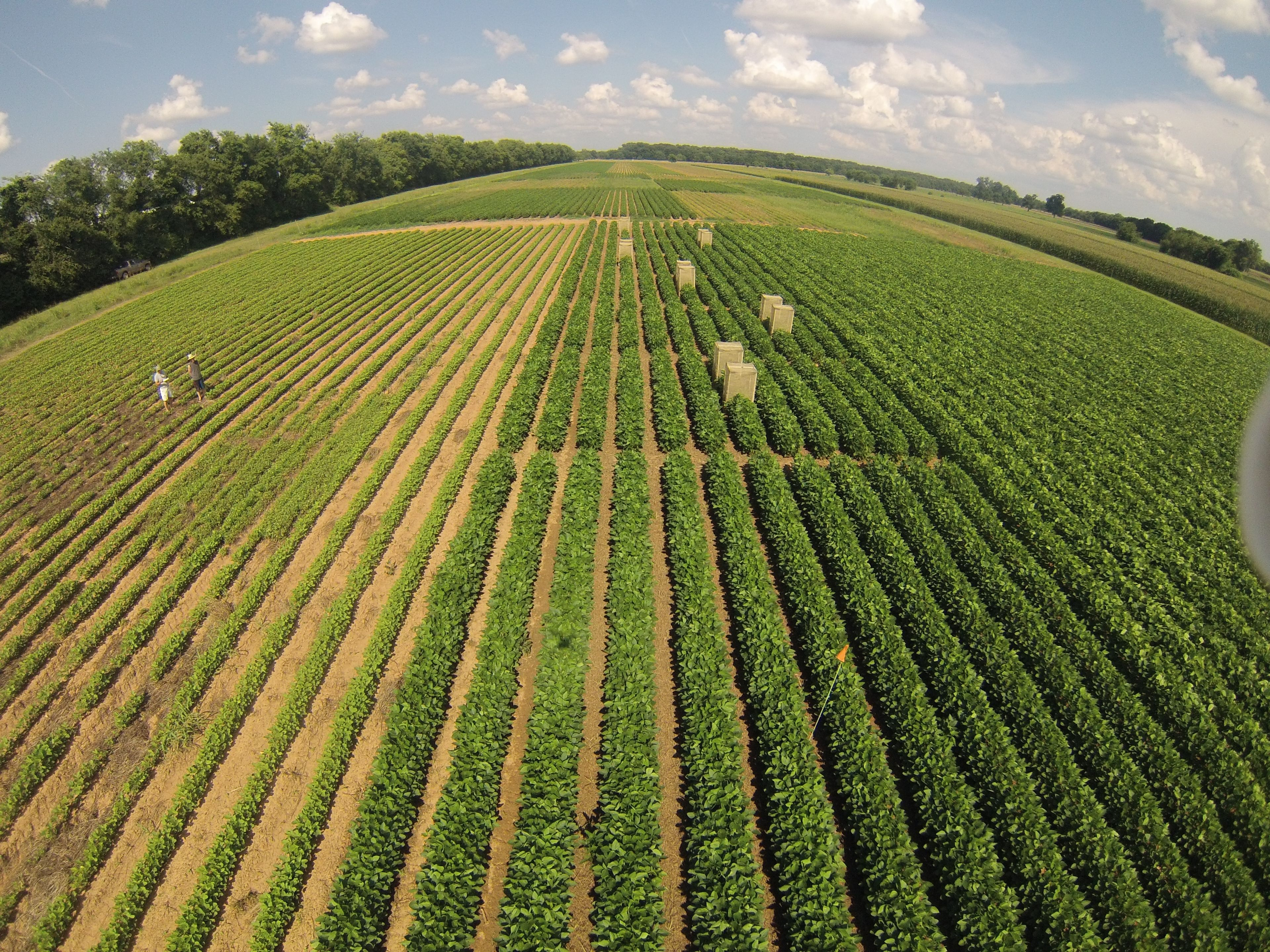 Crop Fields Aerial images | Crop field, Aerial images ...
