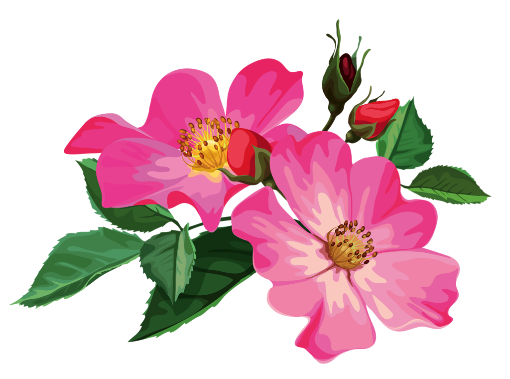 free clip art flowers transparent png clipart images free - 1024×760