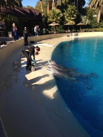 Aquário de golfinhos