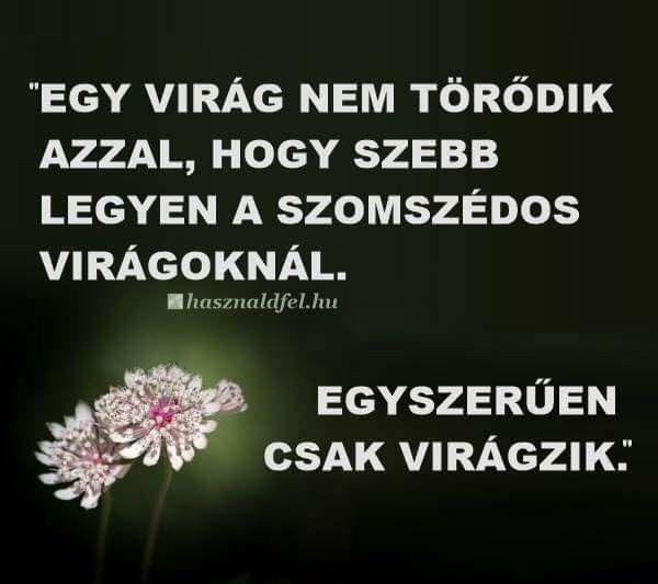 virágokról idézetek Pin by sandor ivan on Idézetek | Quotes, Words, Einstein
