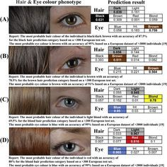Human Hair Color Genetics Chart Google Search