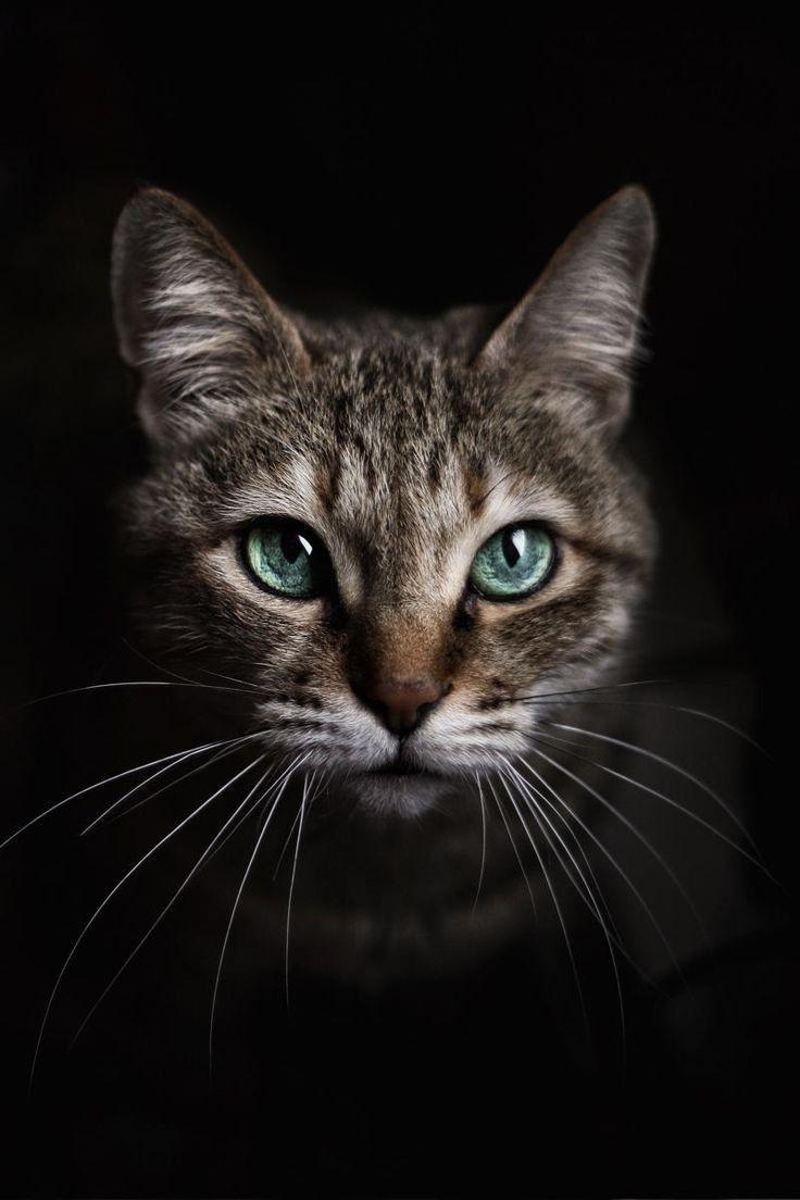 animals katzen katzen bilder tiere und katzen. Black Bedroom Furniture Sets. Home Design Ideas