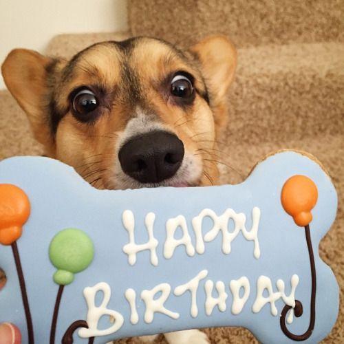 Cumpleaños Feliz Cumple Perros Feliz Cumpleaños Con Perros Cumpleaños De Perro