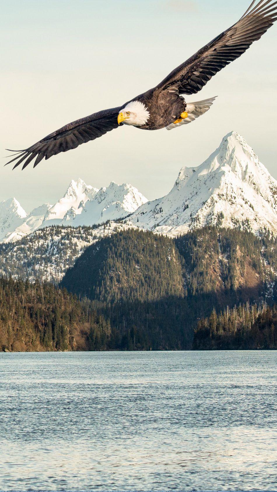 Eagle Mountains Lake Eagle Wallpaper Bald Eagle Eagle