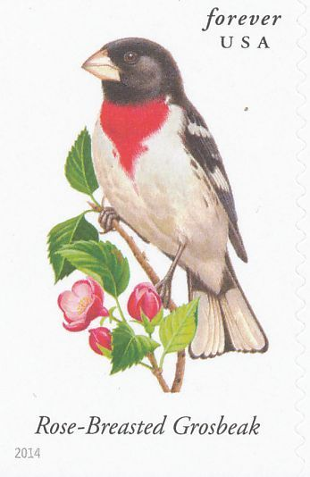 Rose Breasted Grosbeak Stamps Mainly Images Gallery Format