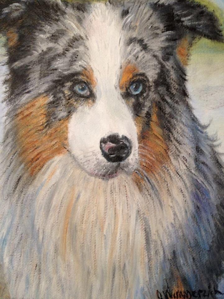 8x10 oil painting of  Aussie Shepherd