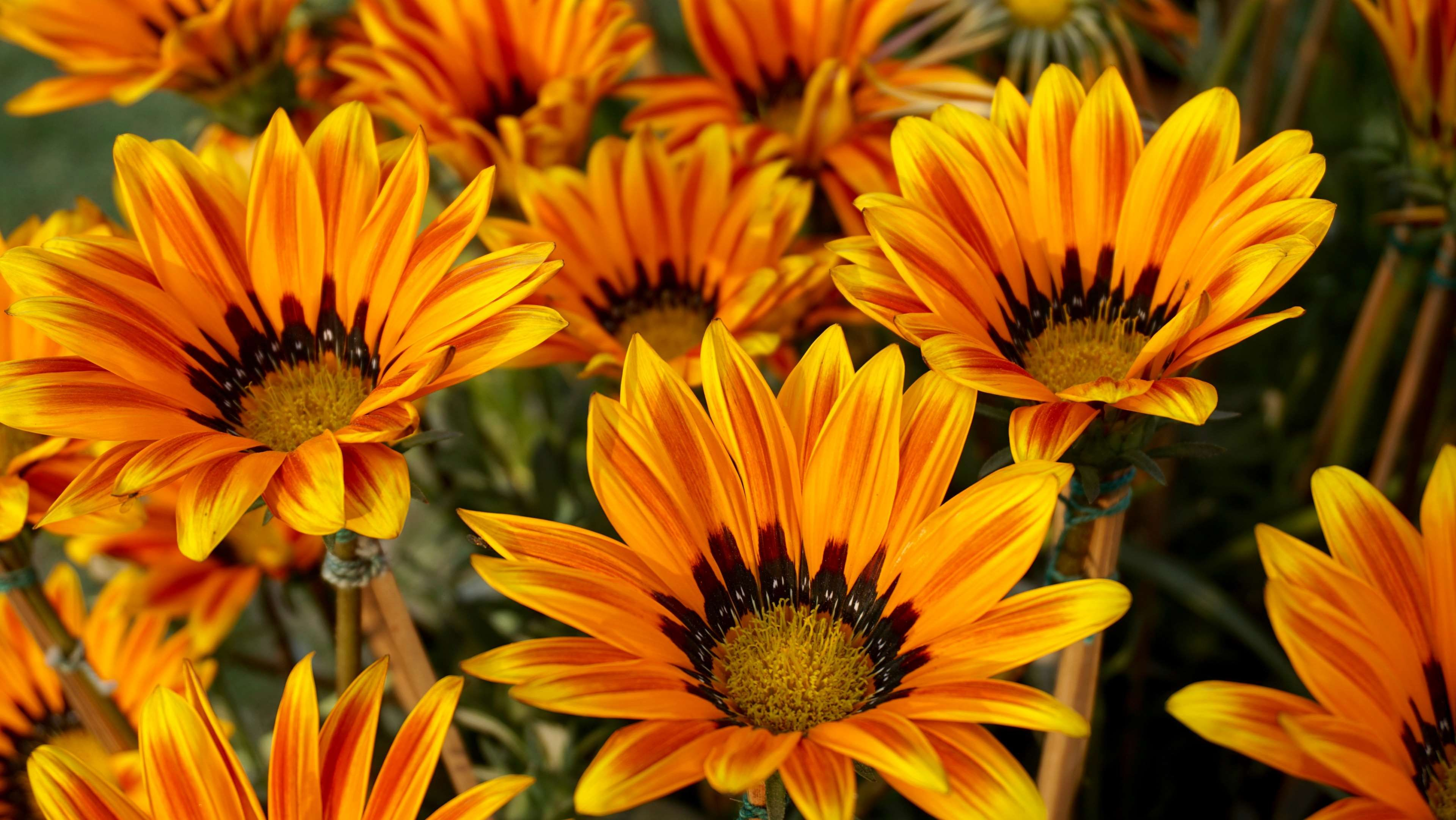 Beautiful flowers bloom blooming blossom bright bunch of beautiful flowers bloom blooming blossom bright bunch of flowers izmirmasajfo