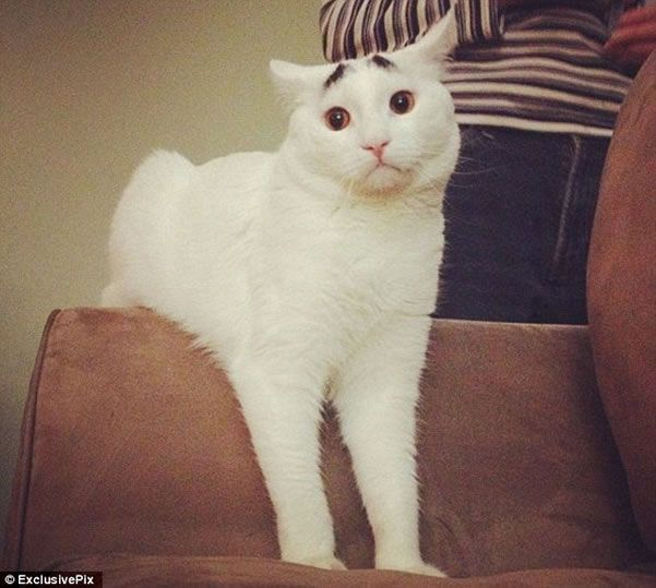 Gato Con Cejas D Crazy Cats Cat Lovers I Love Cats