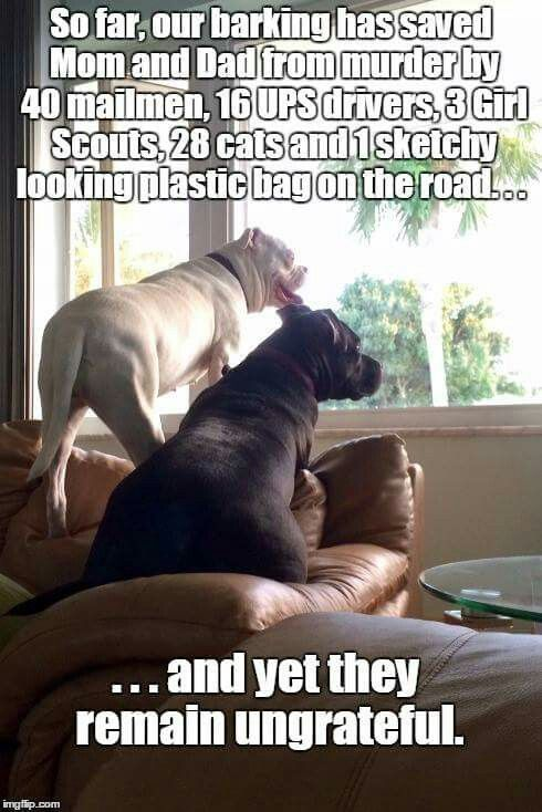 I Feel Safer Already Dogs Barking Funny Dog Memes Funny Dogs Funny Animal Pictures
