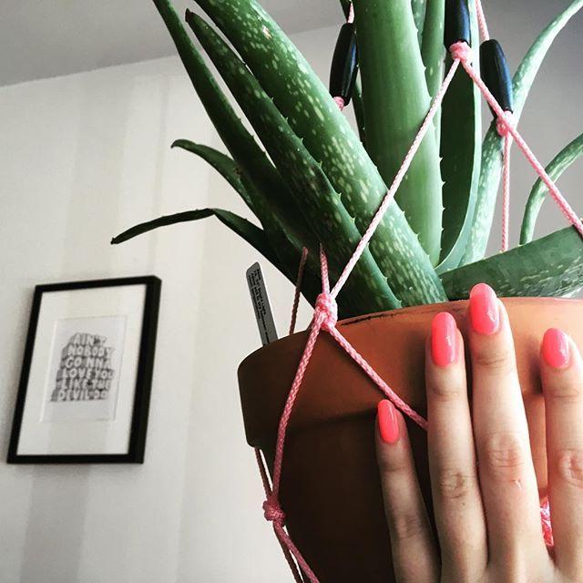 Plantes d'intérieur quasi intuables   Plantes d'intérieur faciles, Plante interieur, Plante