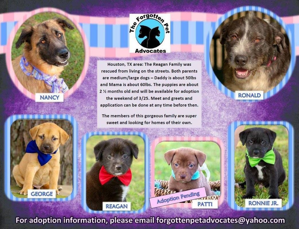 03/25/16-Houston, TX area: The Reagan Family - available for ADOPTION. Open your heart & home ! Foster or Adopt a Forgotten Pet ! Message or Email: forgottenpetadvocates@yahoo.com