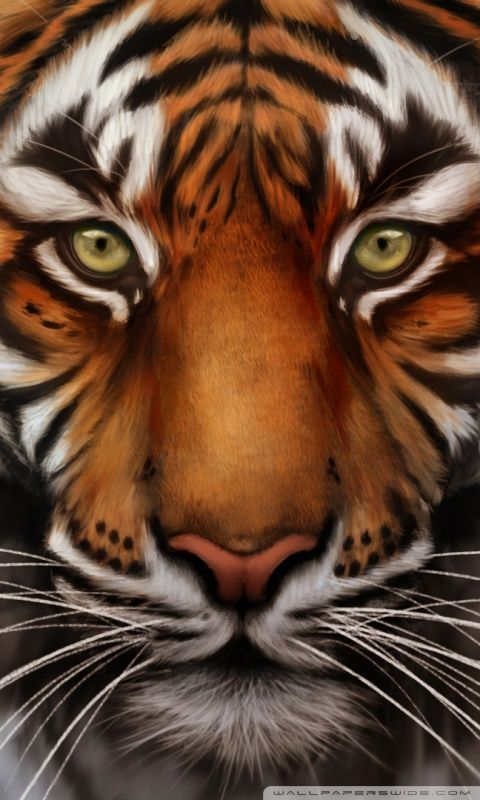 Tiger Wallpaper Tiger Wallpaper Tiger Pictures Tiger Images