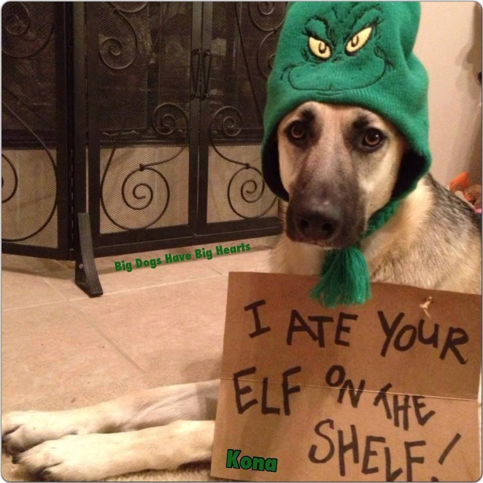 I ate your elf on the shelf! YES!! LOL ;) Dog shaming