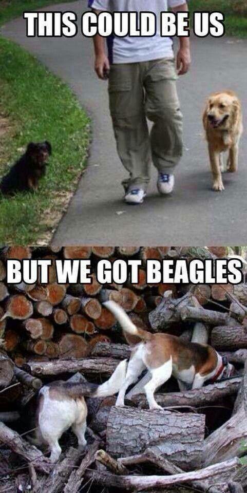 Baby Vs Beagle Beagle Funny
