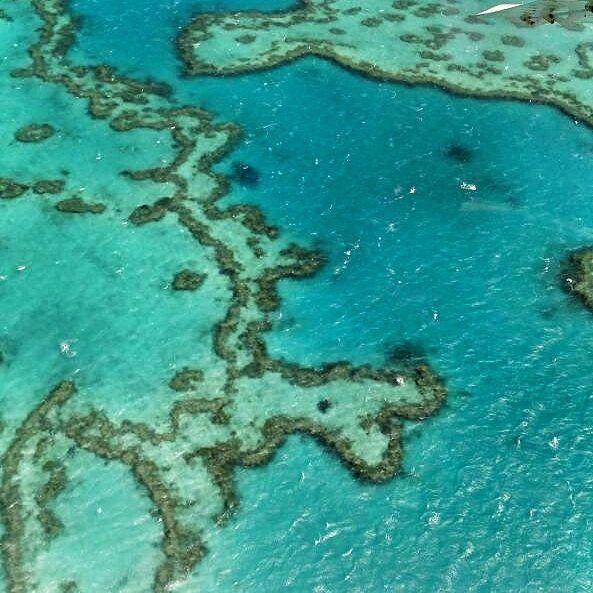 #greatbarrierreef #hamiltonisland #withsundayislands #australia by lindsey_a1105 http://ift.tt/1UokkV2