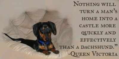 Queen Victoria Dachshund Love Dachshund Lovers Dogs