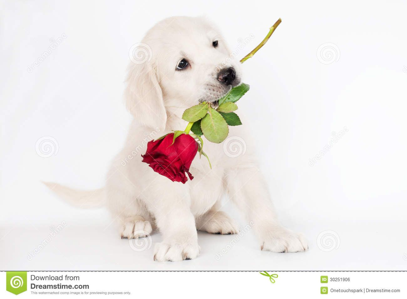 I Love You Happy Valentine S Day Cute Dog Wallpaper Cute Dogs