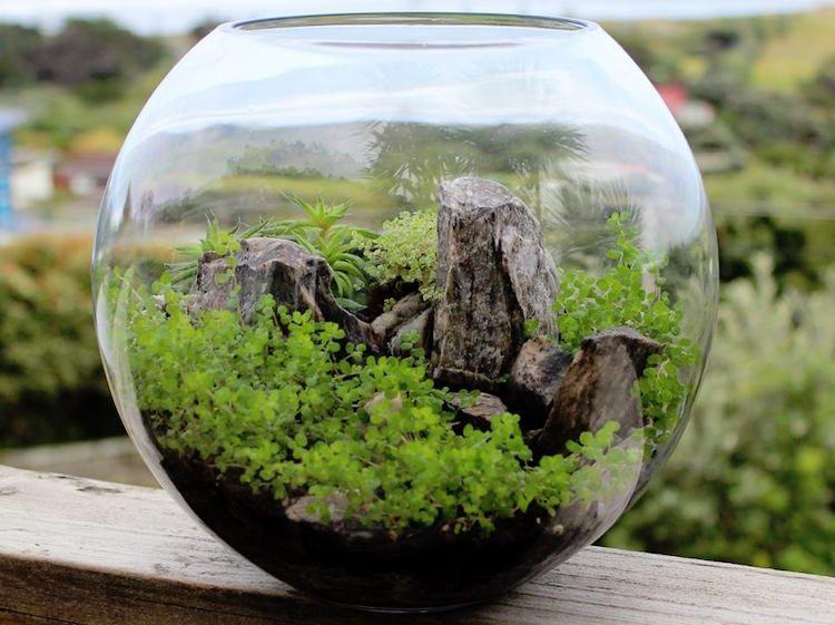 cr er un terrarium plante 20 id es pour r ussir l art v g tal en miniature ornemental. Black Bedroom Furniture Sets. Home Design Ideas