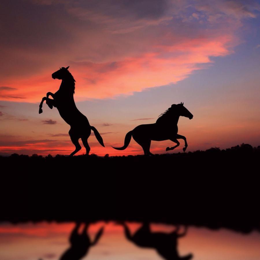 Beautiful Wallpaper Horse Sunrise - a989ab5864df7df5c471455151917377  Pic_834065.jpg