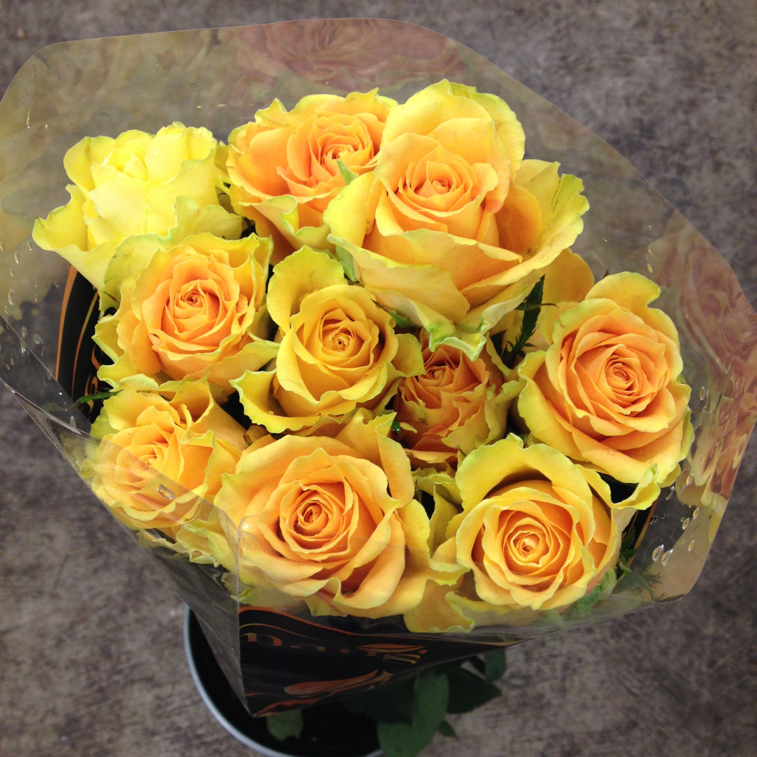 Golden roses called 'Golden Ambition' Sold in bunches of