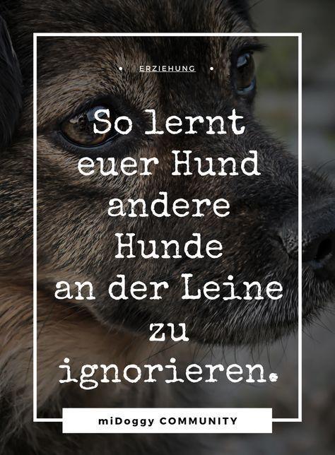Wie lernt mein Hund andere Hunde zu ignorieren?-mit Leine- #learning