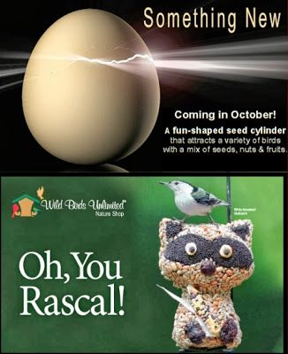 Wild Birds Unlimited Fun Shaped Seed Cylinder Rascal Raccoon At Wild Birds Unlimited Wild Birds Unlimited Wild Bird Store Wild Birds
