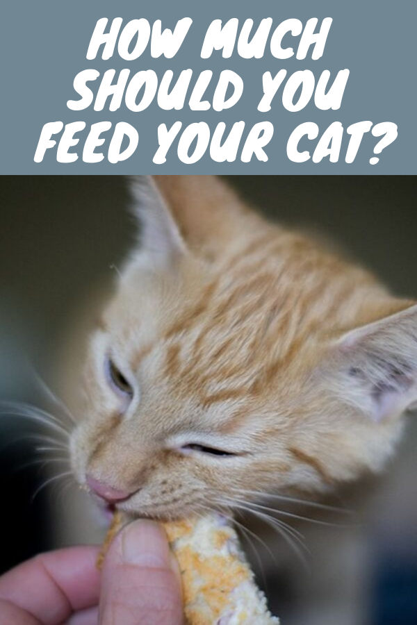 How Much Should You Feed Your Cat Cats Cat Litter Beautiful Cats Pictures