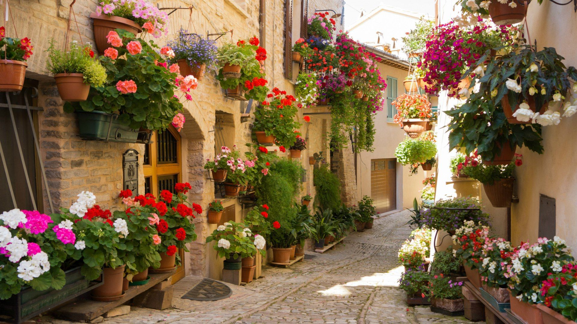 Blooming Umbria Italy View Wallpaper Mediterranean Landscaping Custom Murals