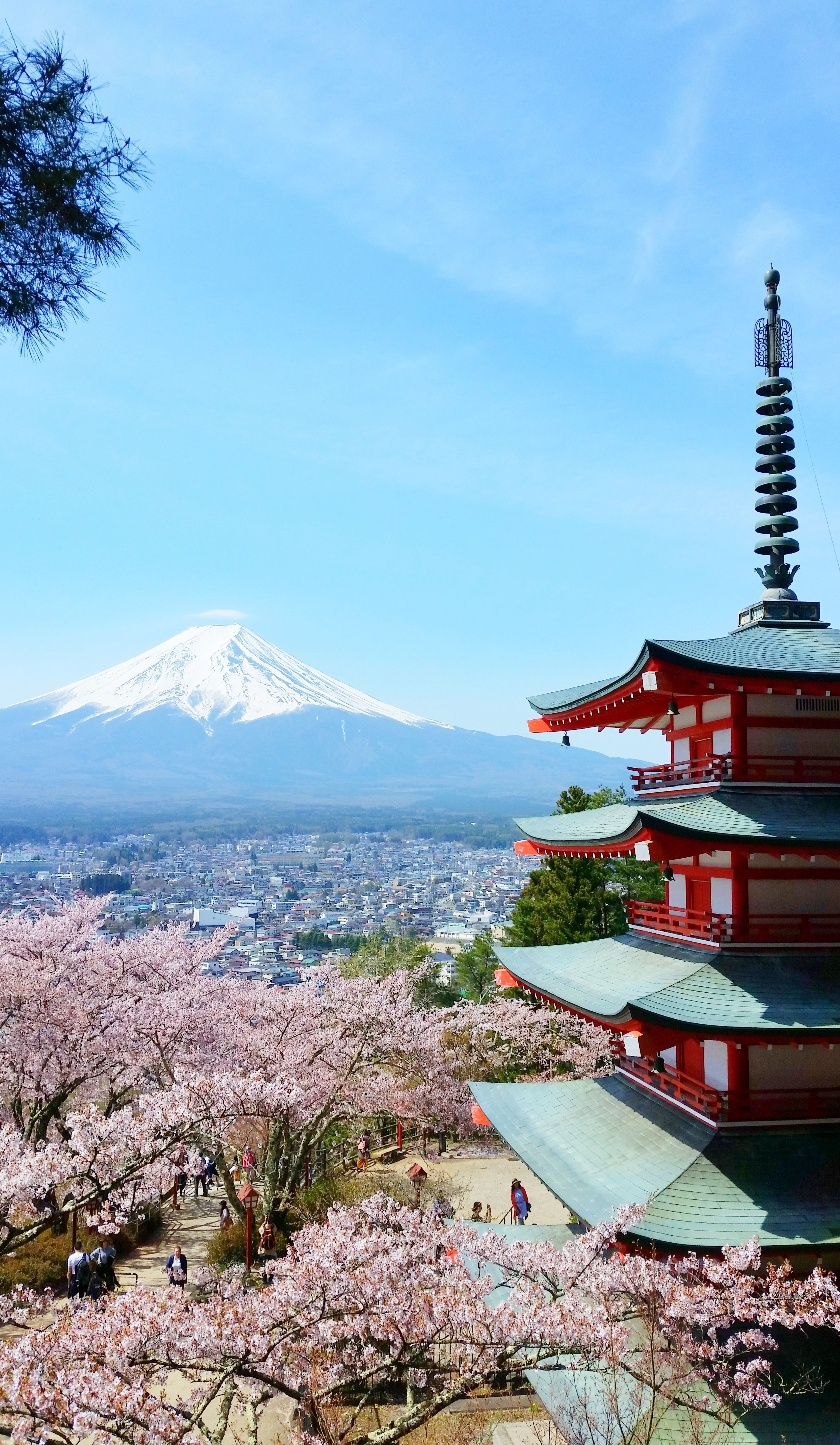 tokyo japan travel destinations. japan travel tips. nature photography. japanese. cherry blossom season. things to do in japan. places to visit in japan. backpacking east asia. world bucket list destinations.
