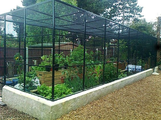 Welded Mesh Ideas And Uses With Images Fruit Cage Plant