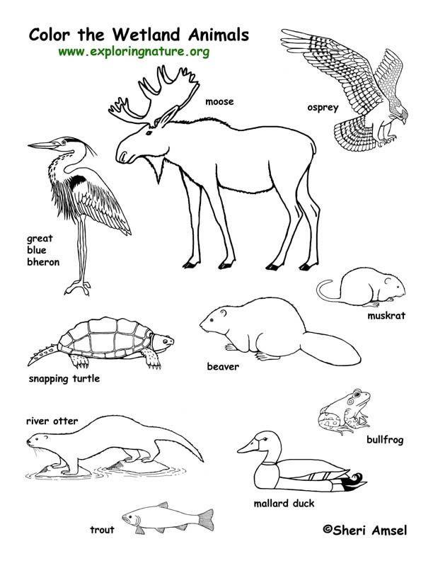 Wetland Animals Coloring Page amérique du nord , canada