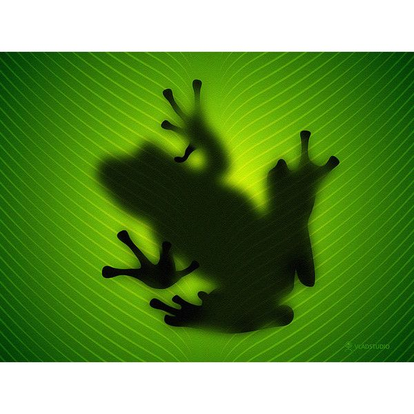Frog Wallpaper, Shadow Images, Frog