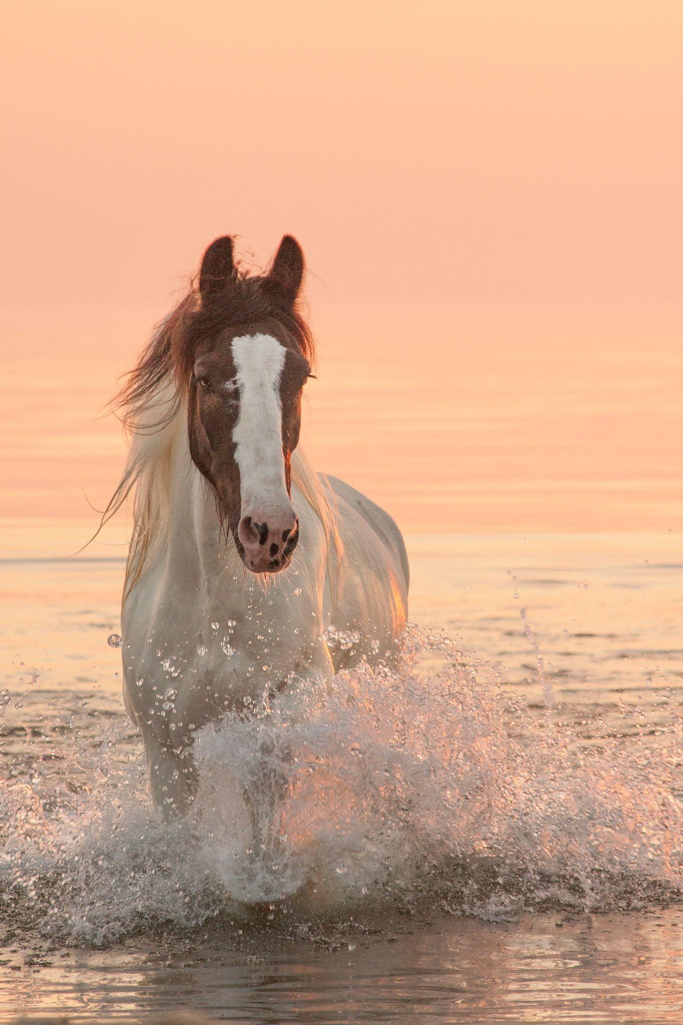 horse photography sunrise horse is a majestic beauty by foto zdanka pferde niedliche