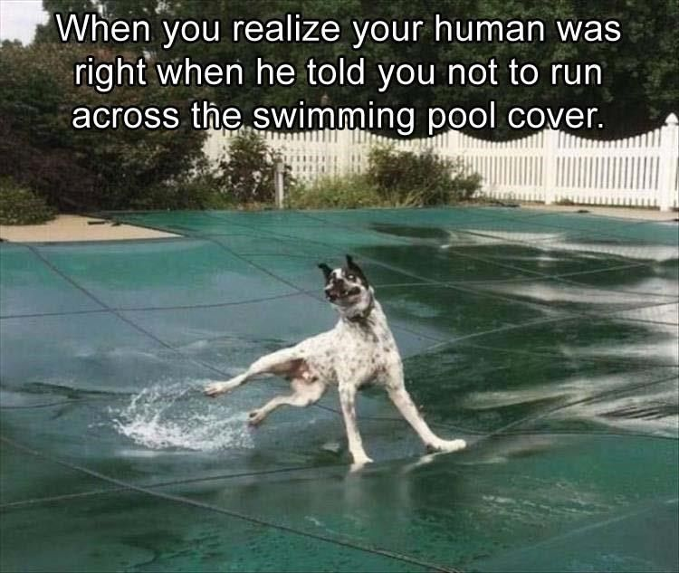 20 Of The Finest Memes For Your Monday Funny Animal Memes Funny Dog Memes Snapchat Funny