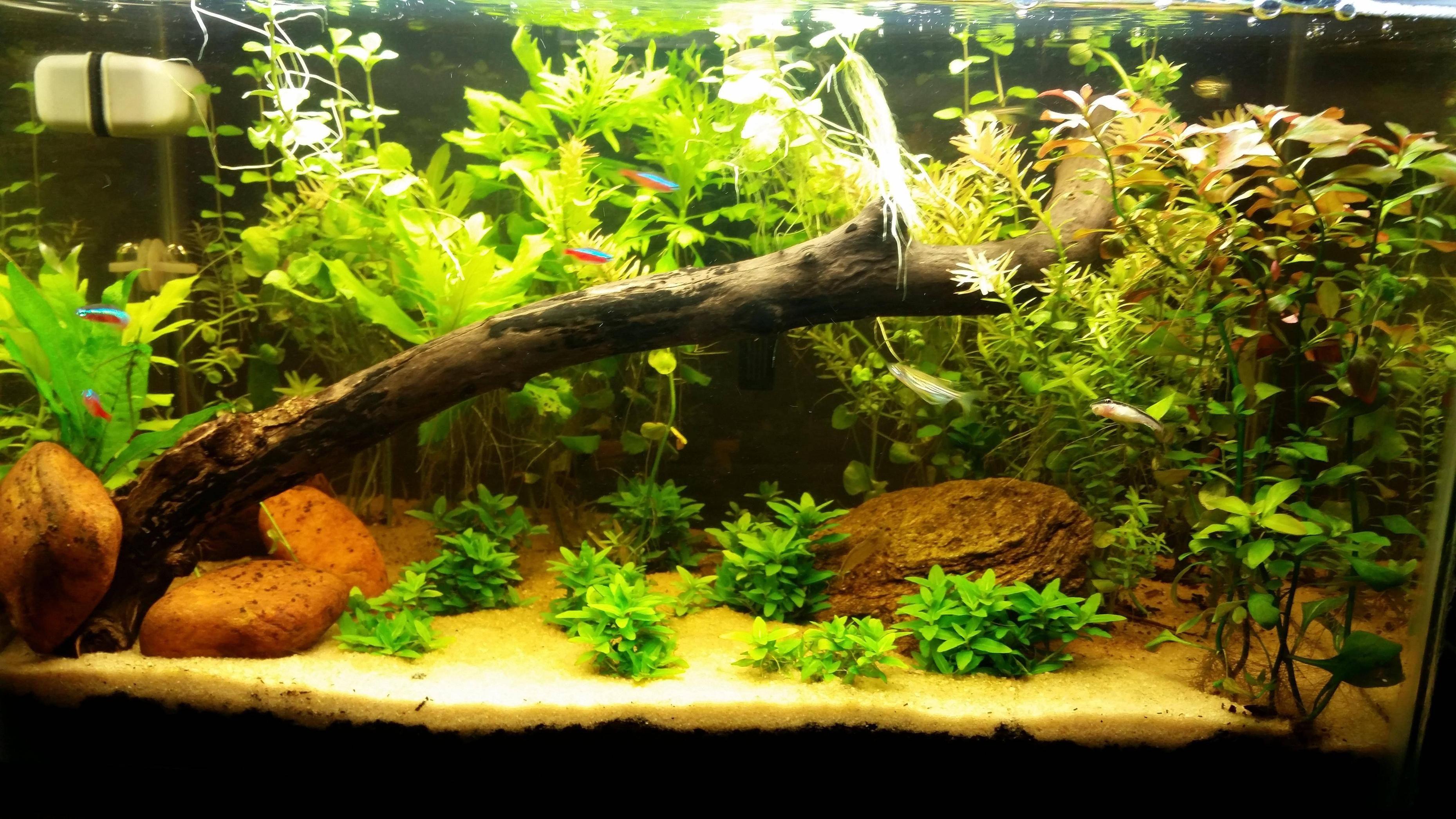 a990157367bab8ddbf1630b76b2d6426 Luxe De Crevette Aquarium Des Idées