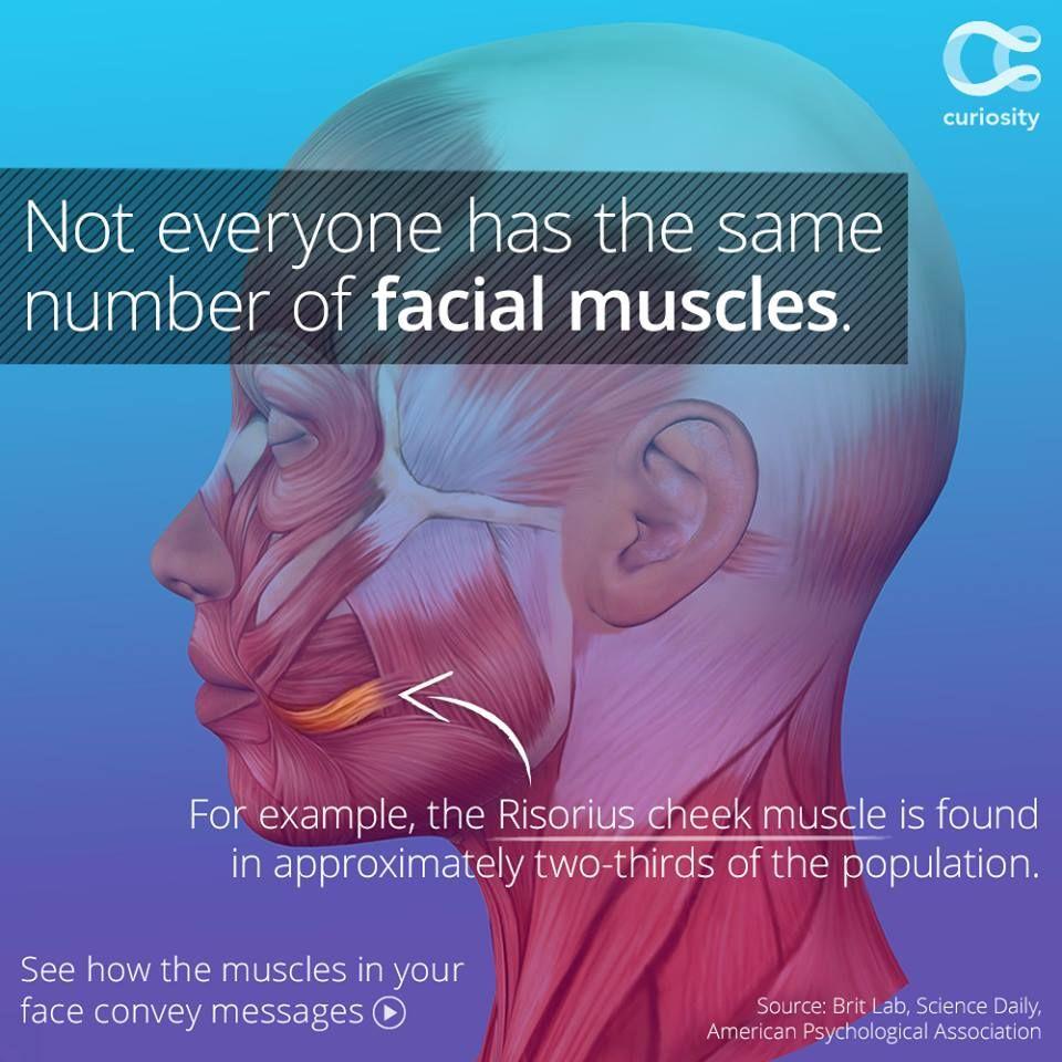 124070originalg 960960 Science Pinterest Face Anatomy