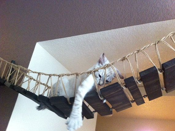 Cat bridge.. indiana jones cat bridge by CatastrophiCreations