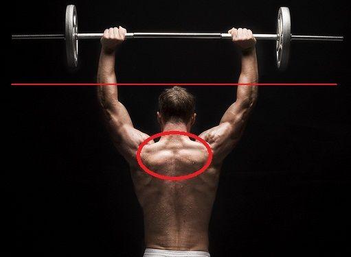 Pin En Anatomia