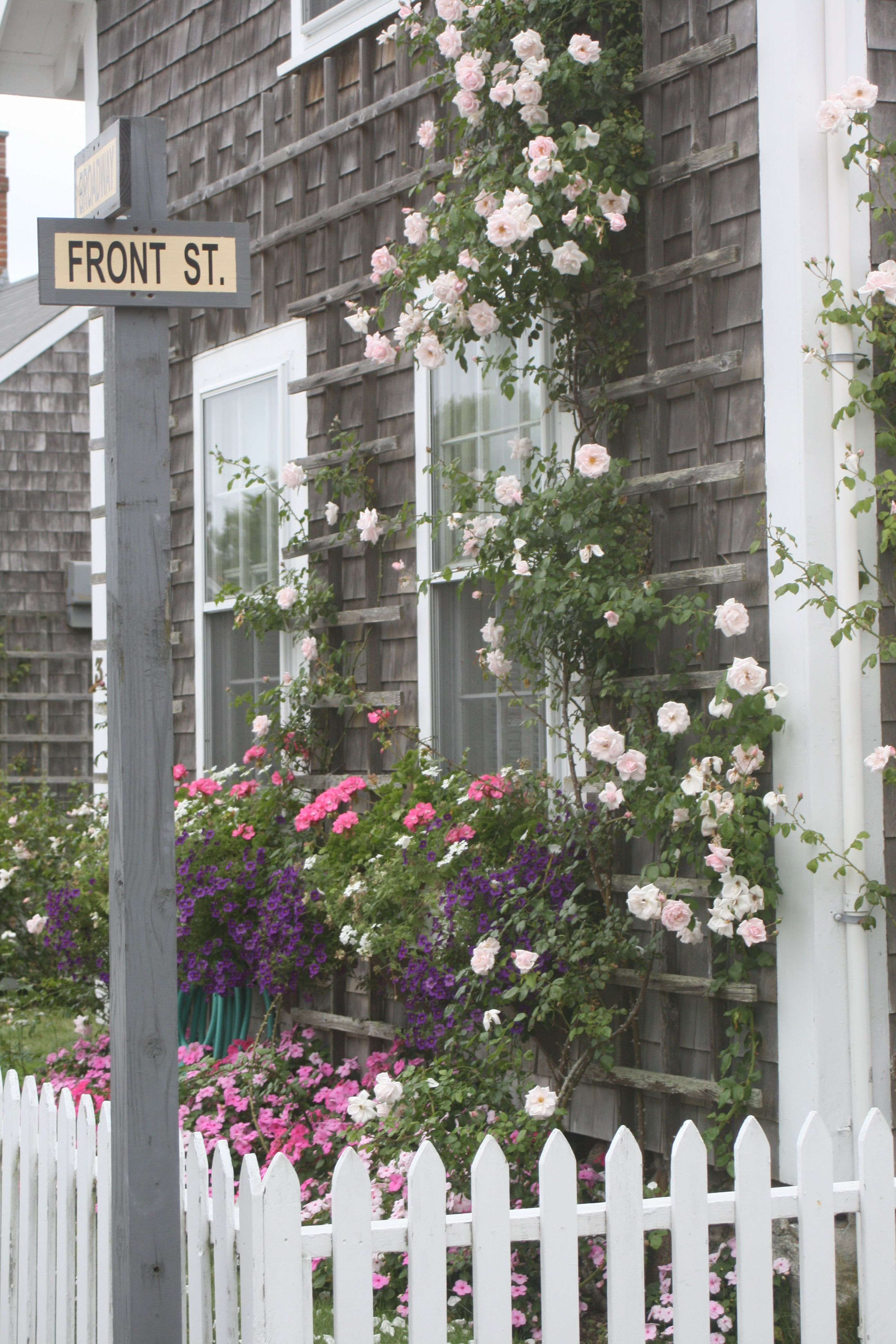 beautiful home hydrangeas cottage adorable pin cottages nantucket roses and