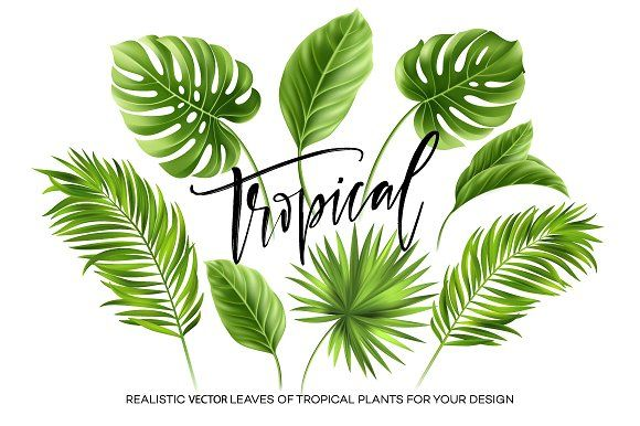 Tropical Leaves Leaves Vector Tropical Leaves Illustration Tropical Leaves These tropical leaves have transparent backgrounds, thus you can easily drag and drop them in your layout. tropical leaves leaves vector