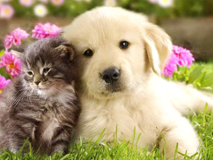 Very Cute Puppies And Kittens