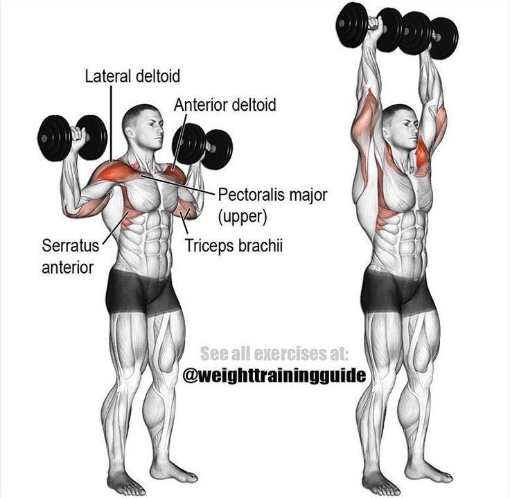 упражнения для рук и плечей в картинках треппинг применяется